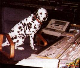 Lou Dog mixing it up(original)